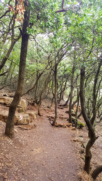 שביל הפסגה בהר מירון