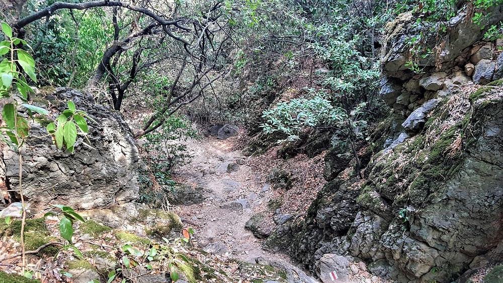 חורש וצמחיה בכרמל בנחל יגור