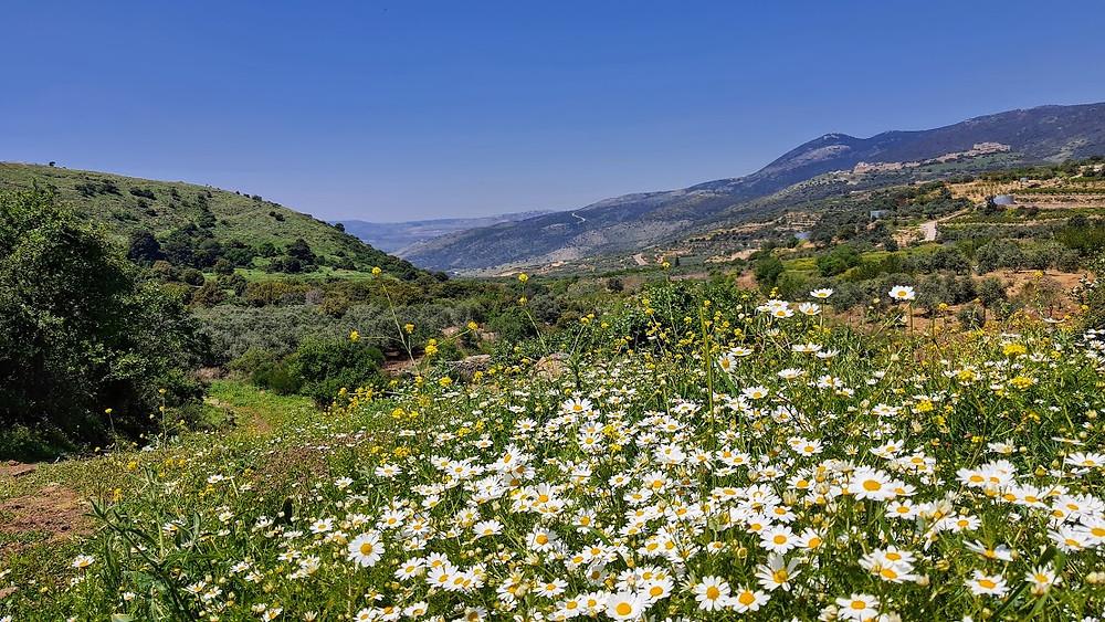 פריחה אביבית בנחל סער בצפון הגולן