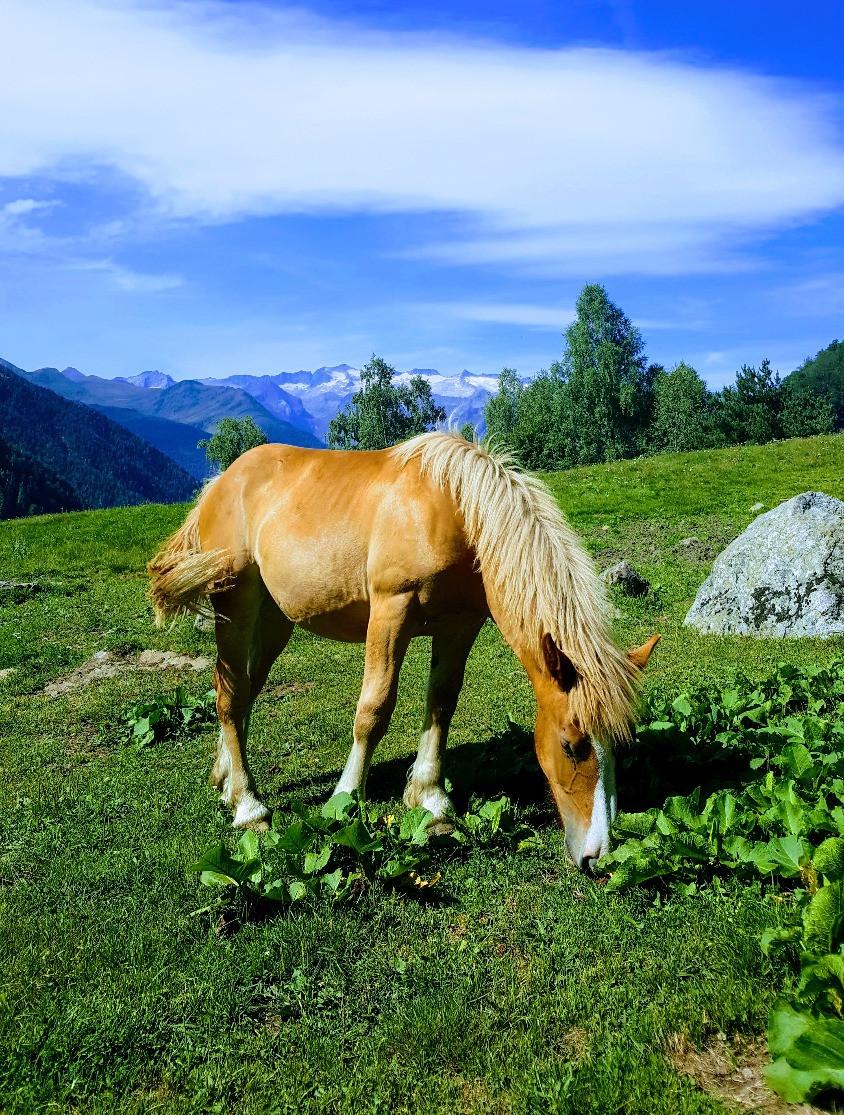 סוס רועה באחו בפירינאים