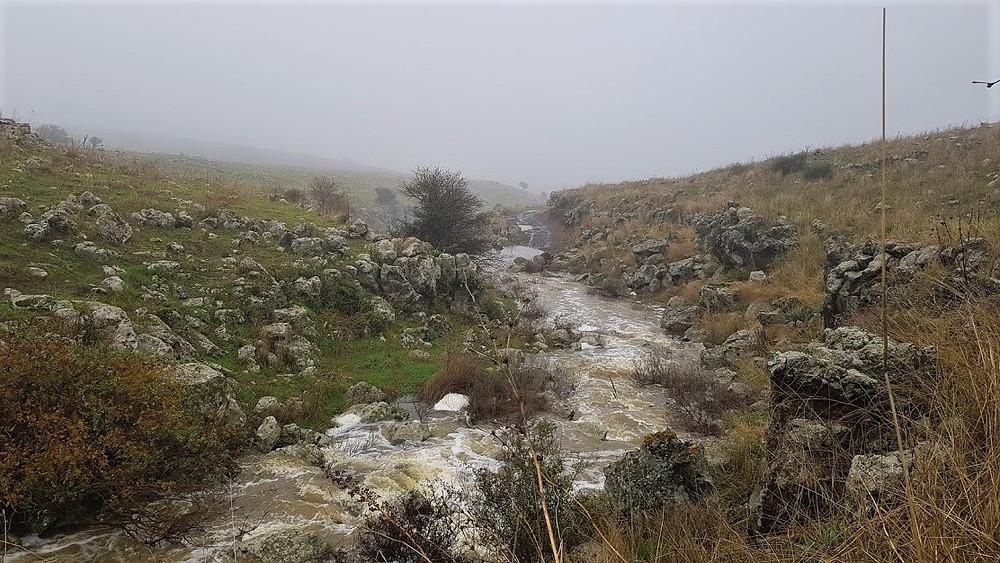 מפלוני מים בנחל עורבים בחורף ברמת הגון