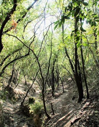 מסלול מעגלי בגליל המערבי בנחל הבאר ביער חניתה