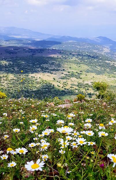 מסלול מעגלי בהר אביתר בגליל תמונת נוף מהפסגה