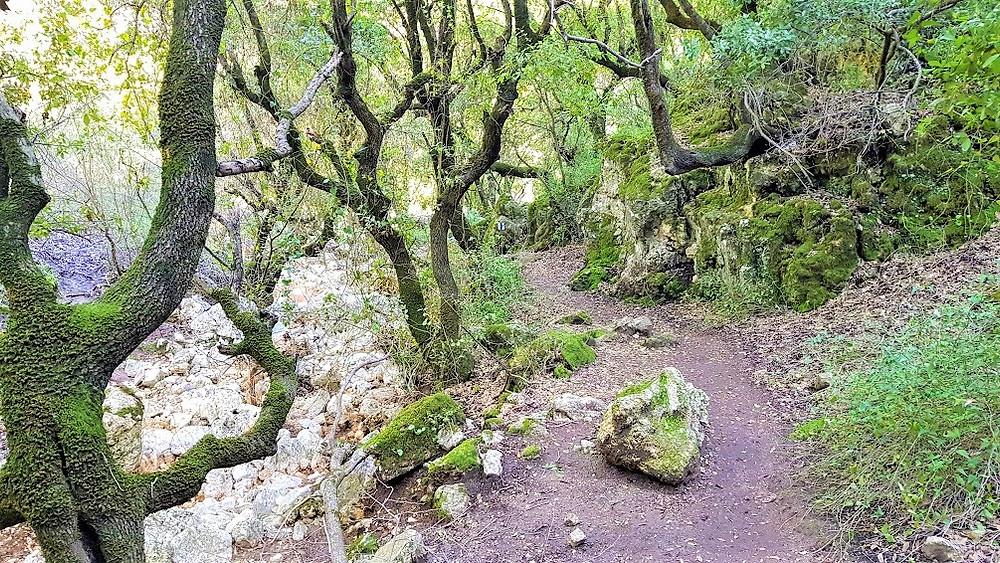 שביל ביער ברעם בגליל מוצל ויפה