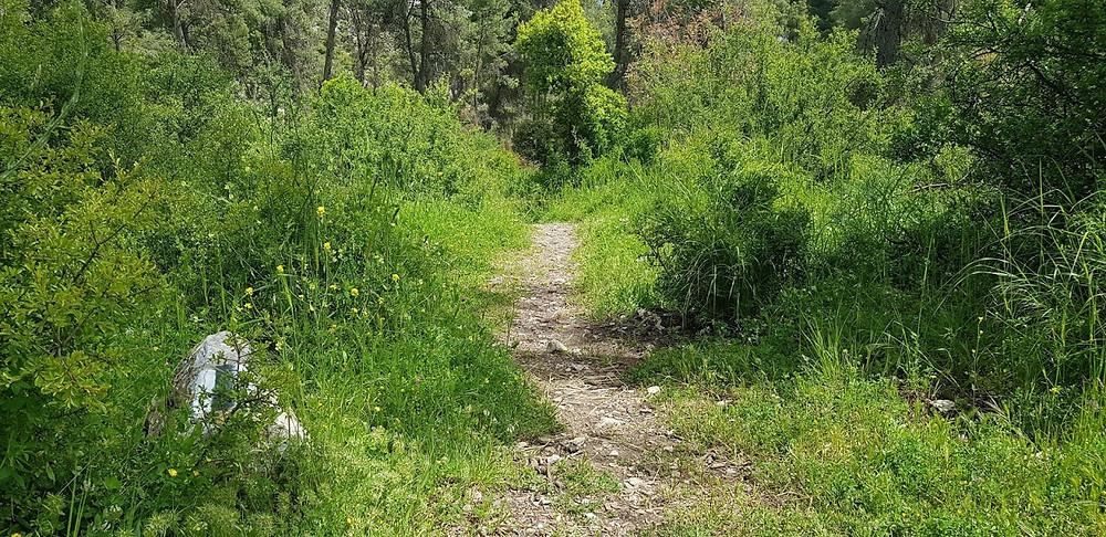 שביל ביער ביריה מבית כנסת נבוריה לתצפית מצוקי דלתון