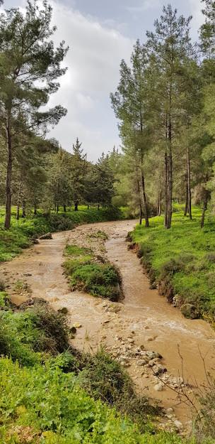 טיול פריחה וזרימות בנחל דישון