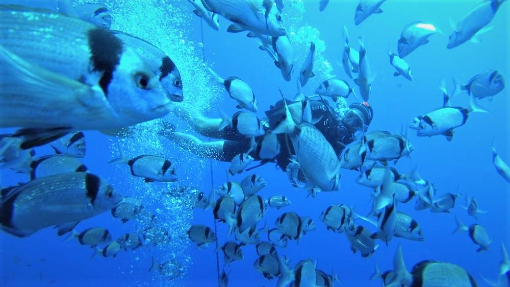 צלילה בלרנקה צלילה בזנוביה