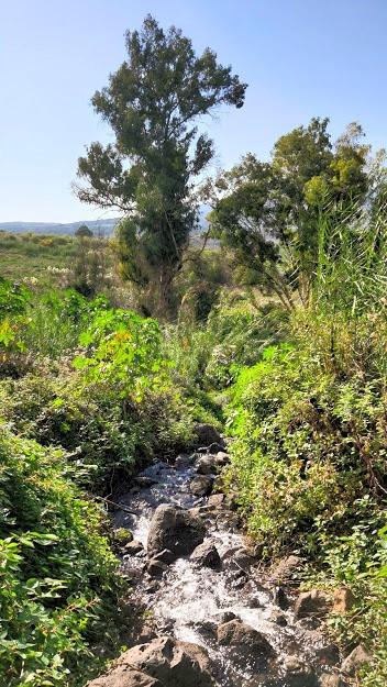 מורדות רמת הגולן ליד עין דרדרה מפלי מים קטנים
