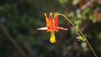 Flower at Sand Pond - California