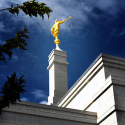 temple rofile