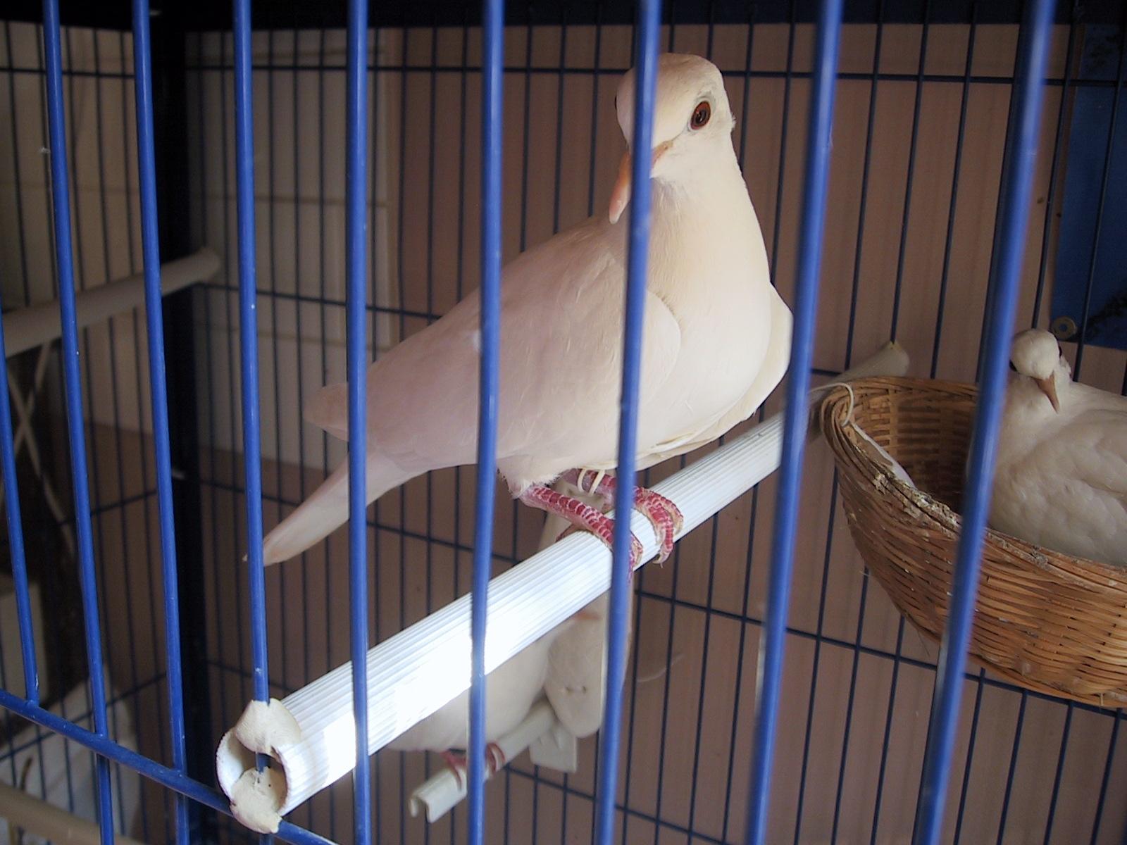 site de rencontre pour passionnés d animaux colombes
