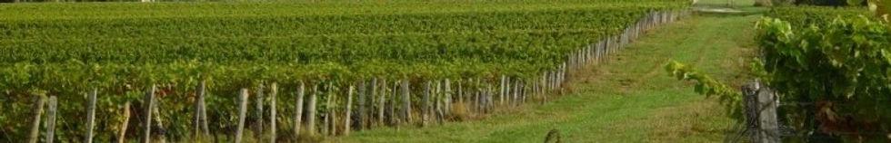 les vignes de la chapiniere sauvignon gamay côt garnon cabernet franc