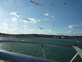 l'île aux oiseaux vue du Port-Grusan