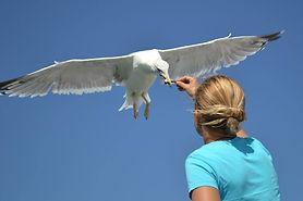 un goéland en vol attrape le poisson qu'on lui tend dans la main