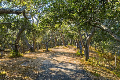Arrive through the oak-studded forest to this 22+ acre parcel that offers southern exposure across the Potrero Valley, yielding ridgeline views from your secluded homeland. Just 7 minutes from the front gate and 15 minutes to Carmel-by-the-Sea, the oak grove offers 4.8 acres of buildable space for a main residence and a guest house. Your privacy in nature is protected while amenities are at your fingertips: The Preserve Golf and Ranch Clubs and daily resident services. Security, water, roads, electricity, cell coverage, fast fiber optic internet, and fire management infrastructure are all in place ready for you to build your dream home in Carmel.