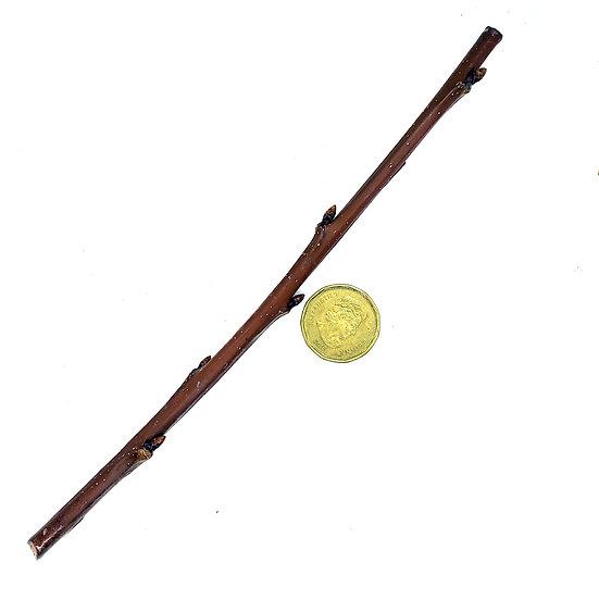 Scionwood - Prunus avium 'Stella' - Stella Cherry (Sweet)