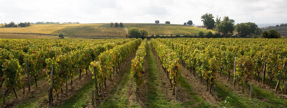wineries-rows-grape-vines-taken-bright-s