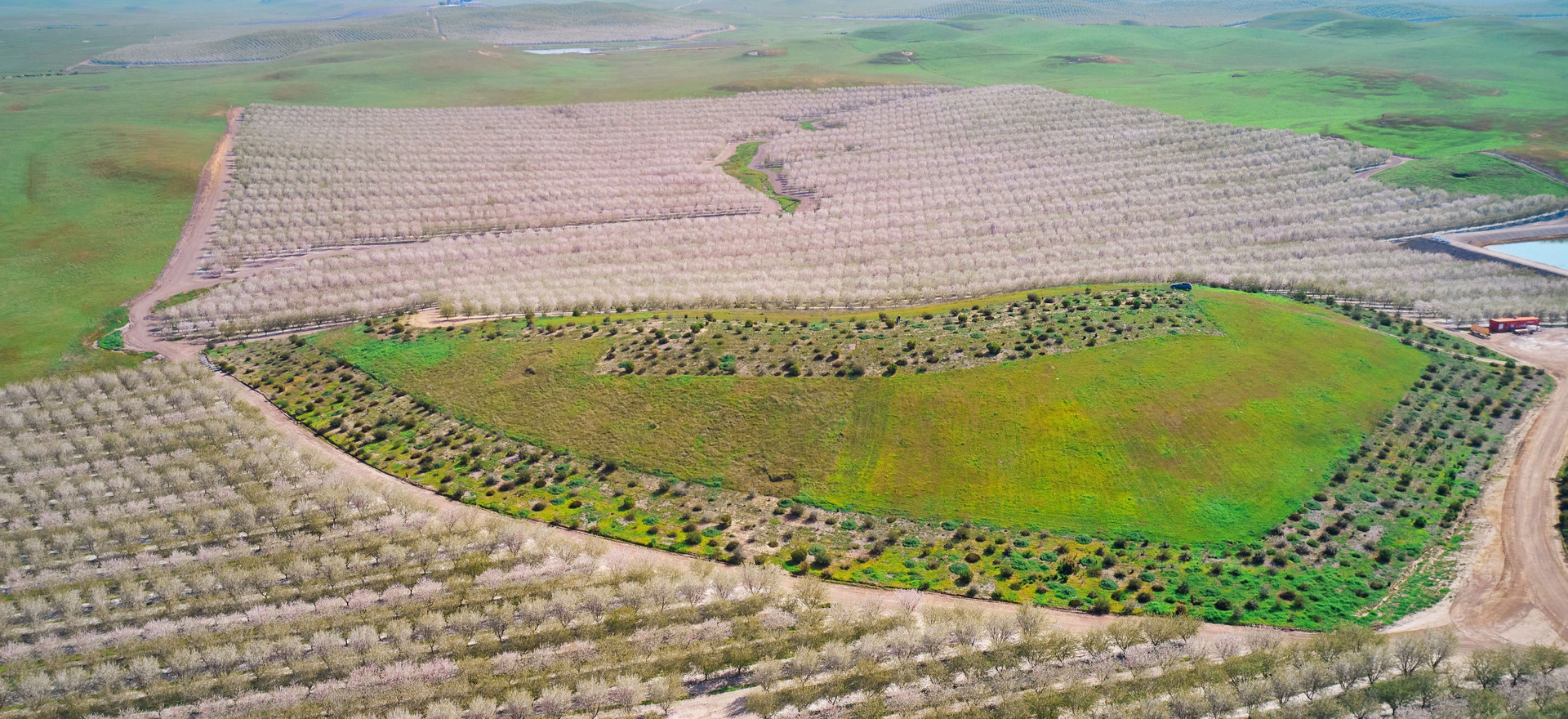 Almond Orchard in Roberts Ferry, CA