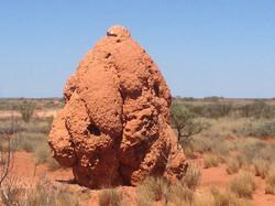 Termite mound Western Australia