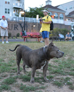 Dog Yoga at Riverside Dog Park