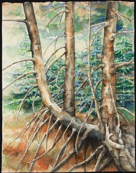 Lost Trees