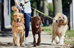 dog walking 2.jpg