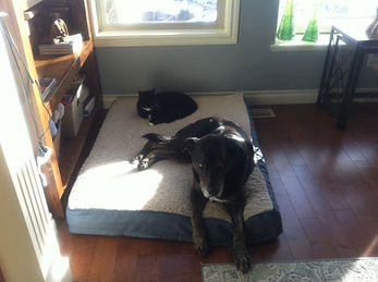 dog yager and kitty.JPG