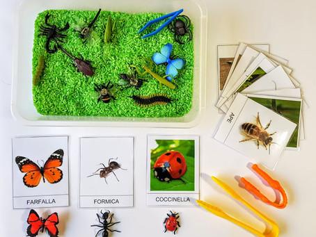 Caccia agli insetti con riso colorato sensoriale