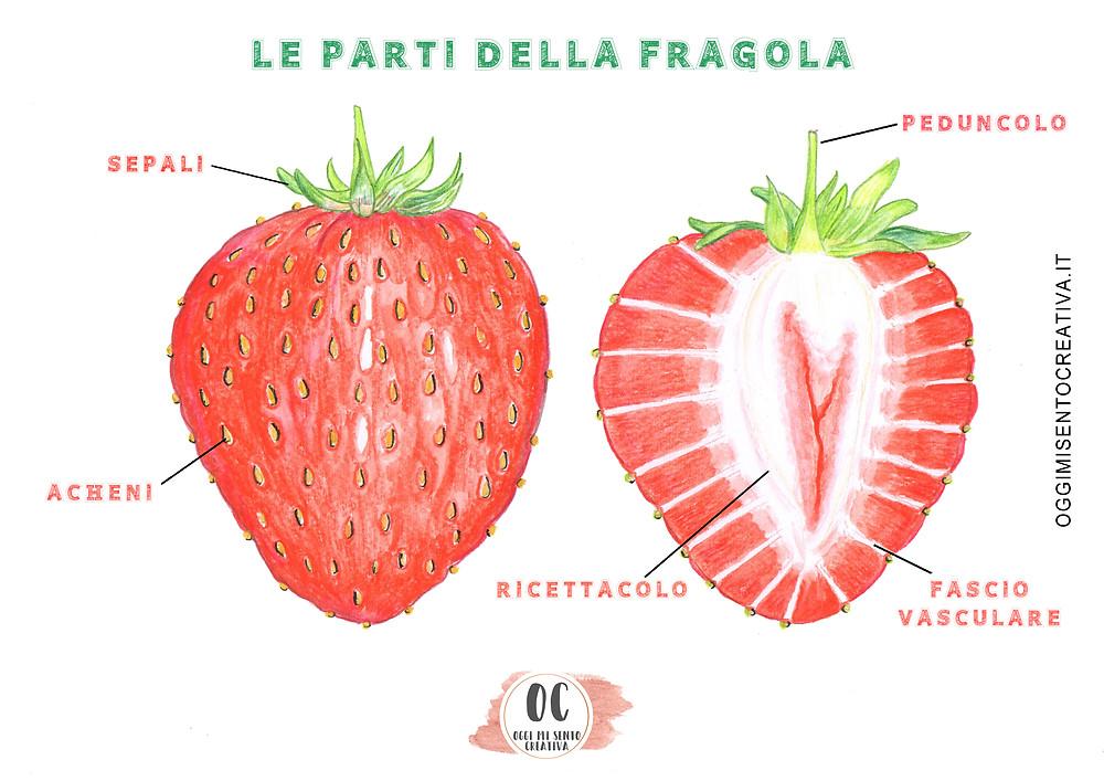 scheda didattica fragola