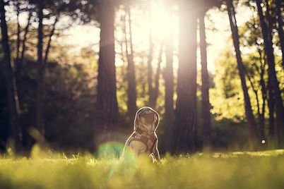 dog-at-the-park_large.jpg