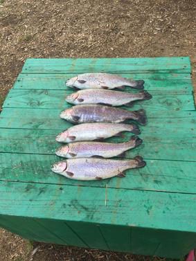 Пятница - фото форелевой рыбалки