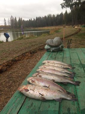 Ловись рыбка большая и ещё больше)