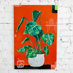 Plant.square.jpg
