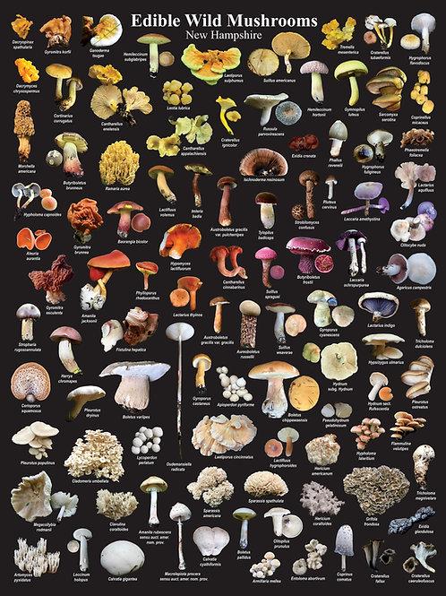 NH Edible Wild Mushroom Poster