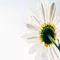 white_flower_3000square.webp