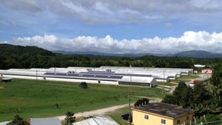 R&D Agri Farm