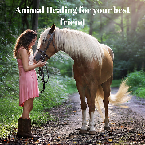 Animal Healing for your best friend.png