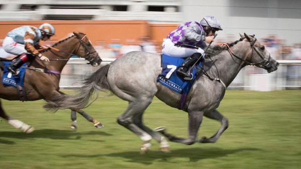 HAVANA GREY WINS GROUP 1.JPG