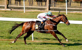 Midsummer knight winning at newmarket.JP