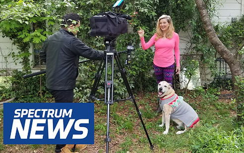 Media Spectrum Zoom Dog Class 1b 16-9 co