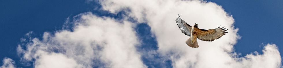 clouds-bird.jpg