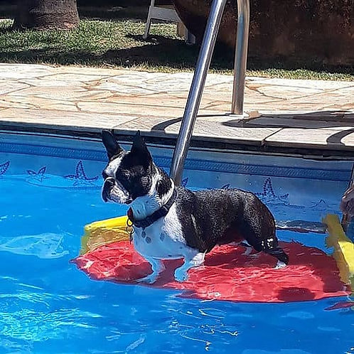 Plataforma Pet para Piscina Save Dog Cód. 460