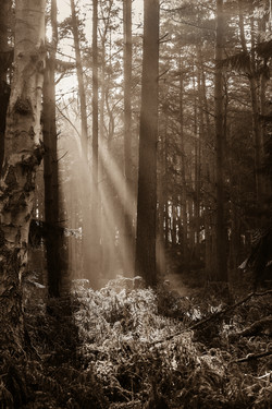 Sunbeams_DSC1309Sep