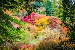 Autumn_DSC4846