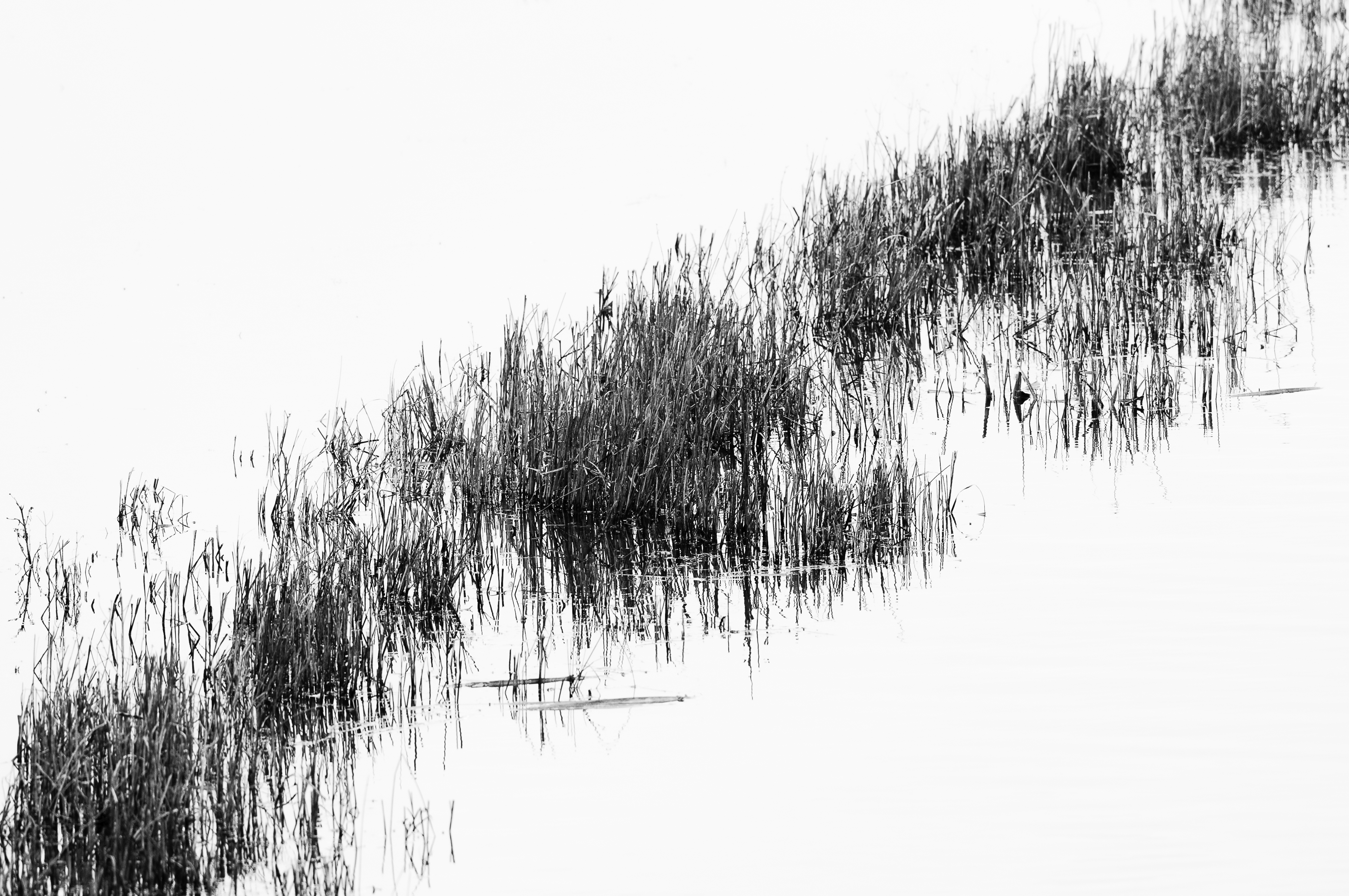 Reeds_DSC9794