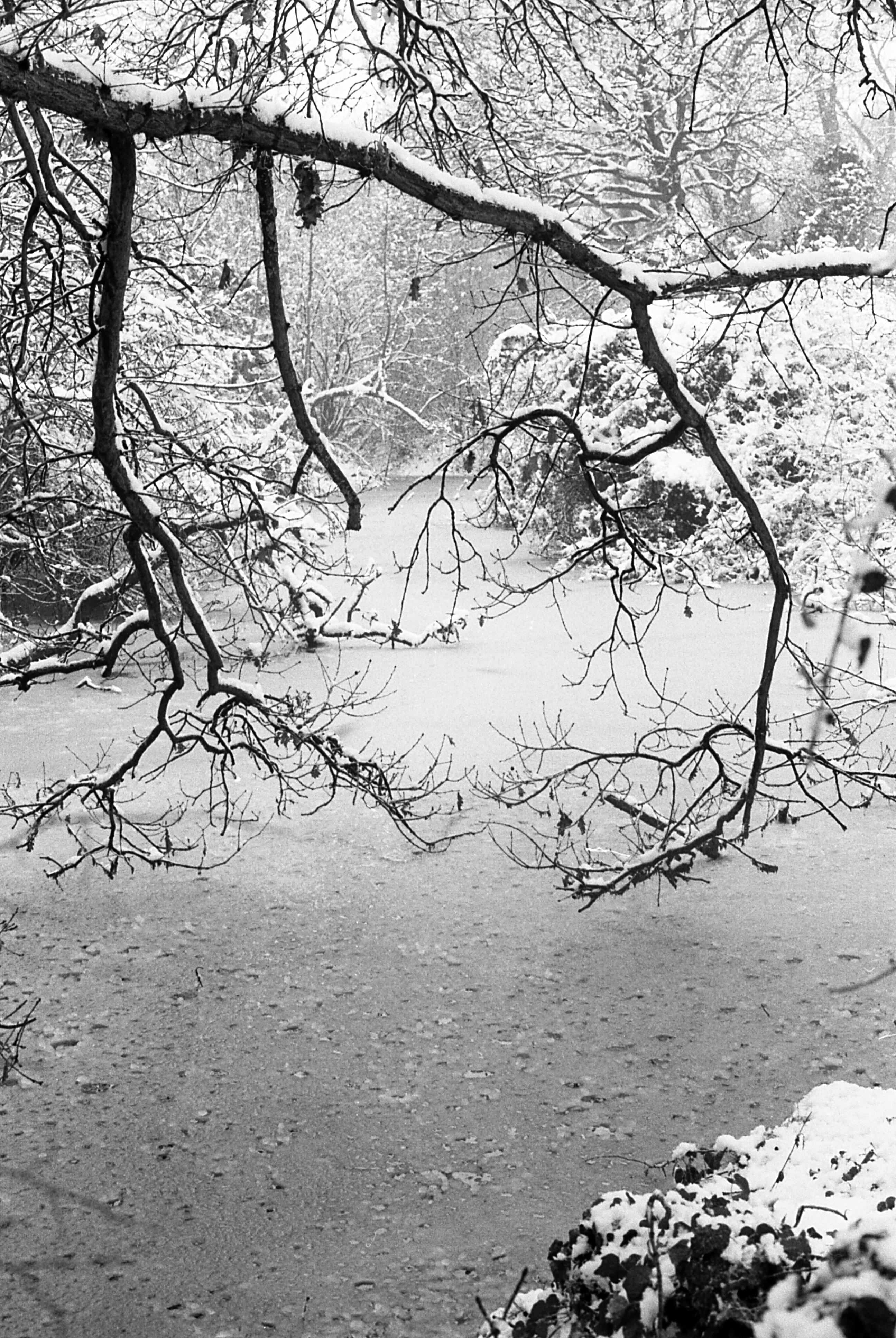 FrozenPond_img016
