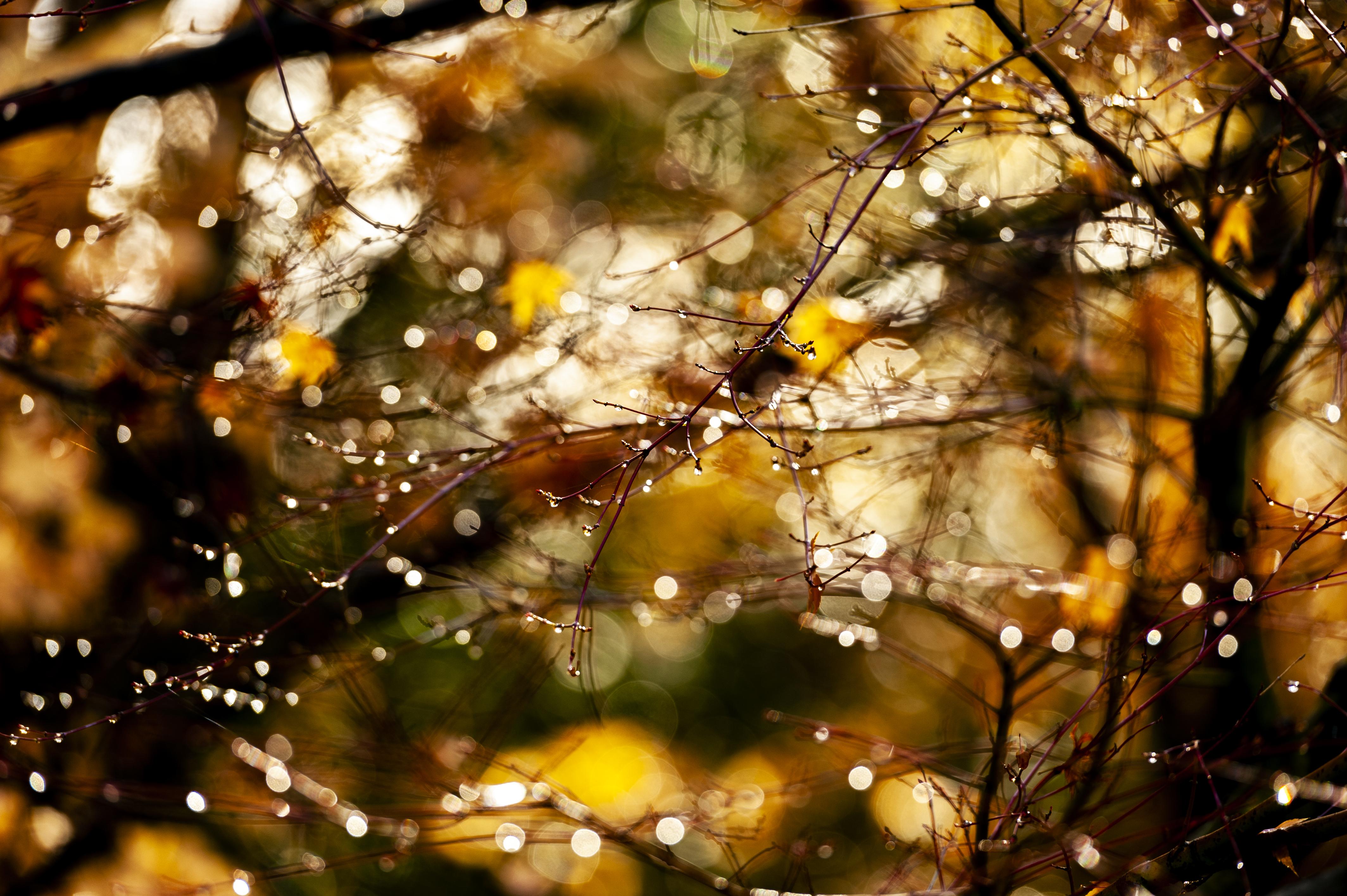 NaturesFairylights_DSC9641