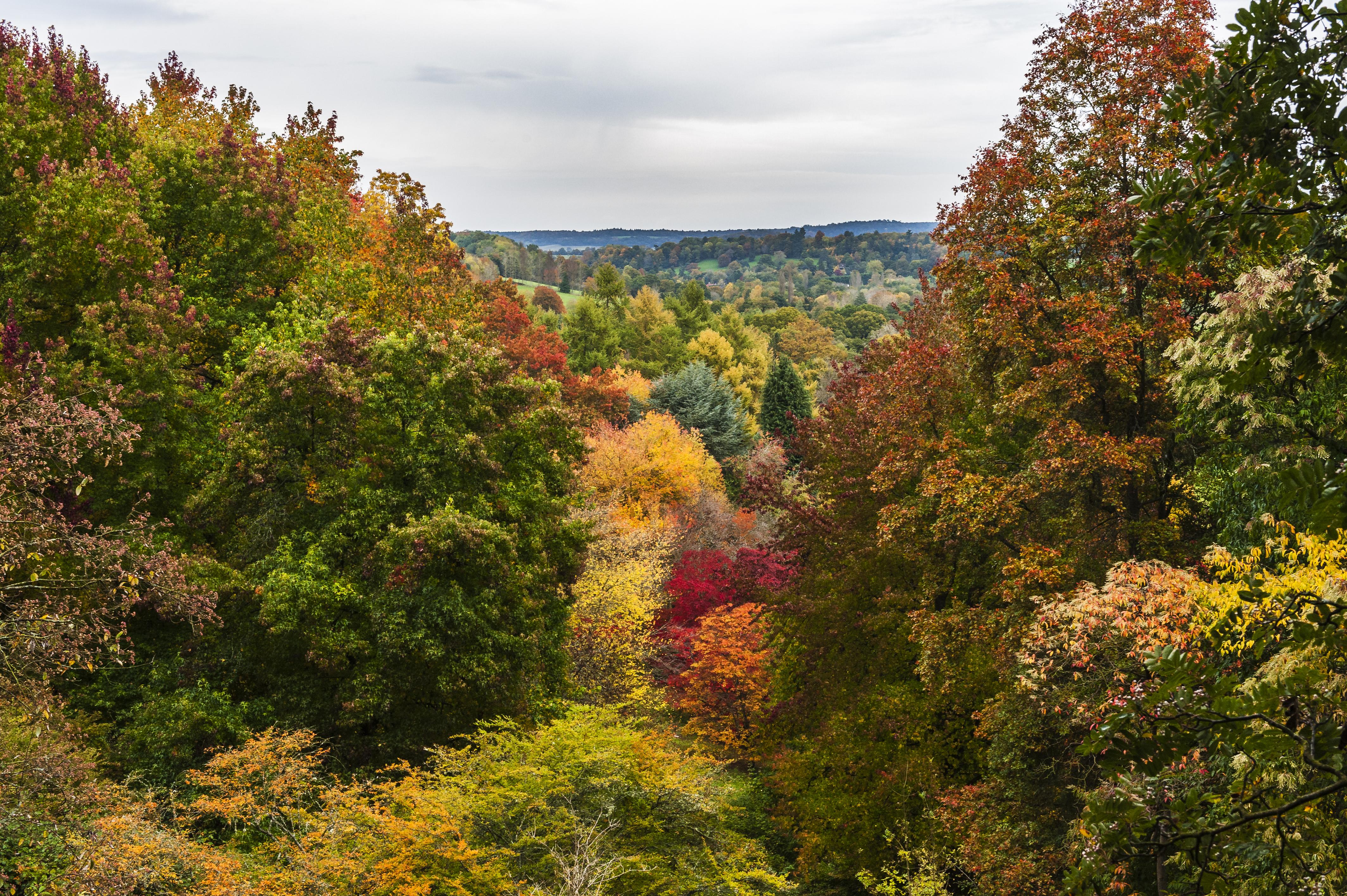 Autumn_DSC4865
