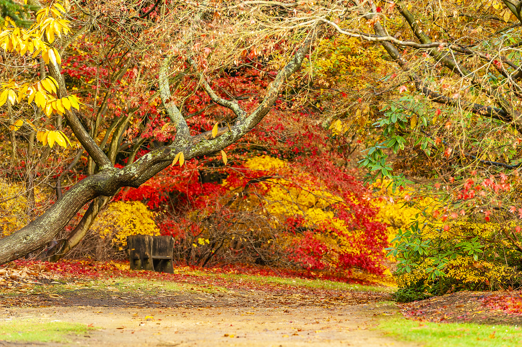 AutumnVW_DSC9636