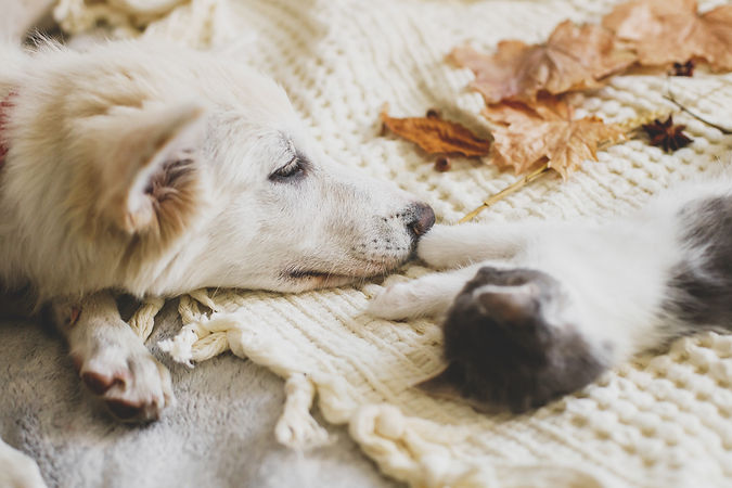 cute-white-puppy-lying-with-little-kitte